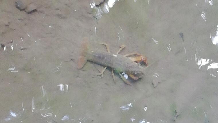 ザリガニが丸見えなので4歳児でもザリガニ釣りが簡単にできる
