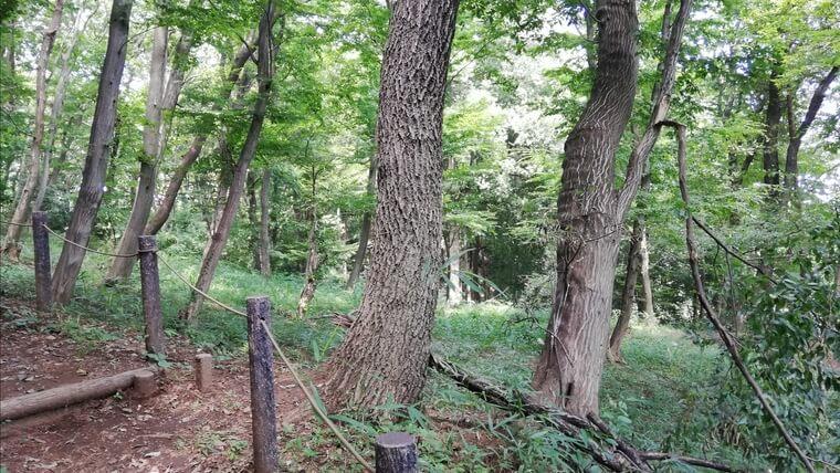クワガタが大好きな樹液を出すクヌギ、コナラ、ヤナギなどの木が沢山