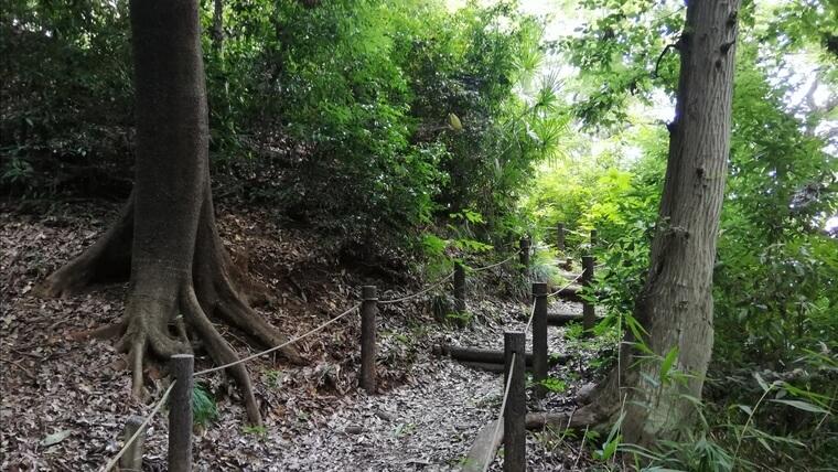 竹間沢こぶしの里には雑木林があるのでクワガタがいる