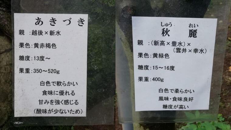 松川梨園で梨狩り体験!梨の品種